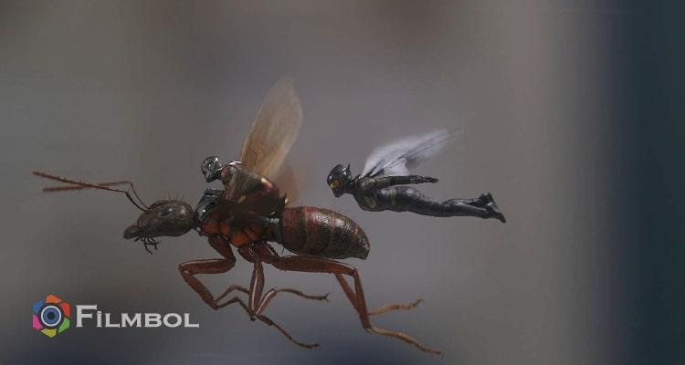 Karınca-Adam ve Eşek Arısı
